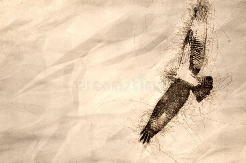 Esboço de um voo da águia pescadora em um céu azul fotos de stock