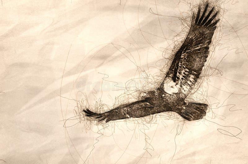 Esboço de uma águia americana imatura em voo ilustração do vetor