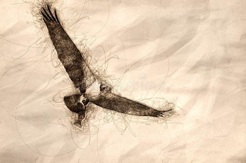Esboço de uma águia pescadora em voo que leva um peixe ilustração stock
