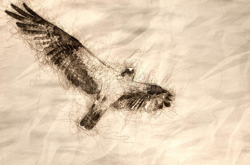 Esboço de uma águia pescadora que faz o contato de olho ao voar no céu azul ilustração stock