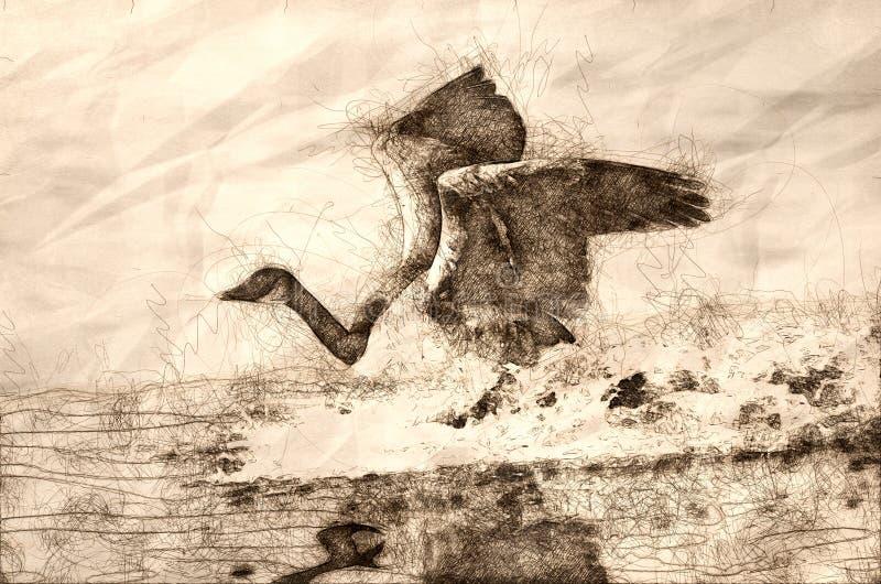 Esboço de uma aterrissagem do ganso de Canadá na água ilustração royalty free