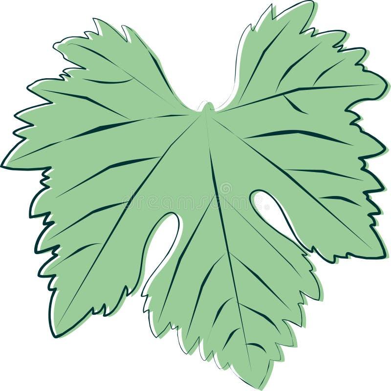 Esboço de uma folha nova verde da videira imagens de stock