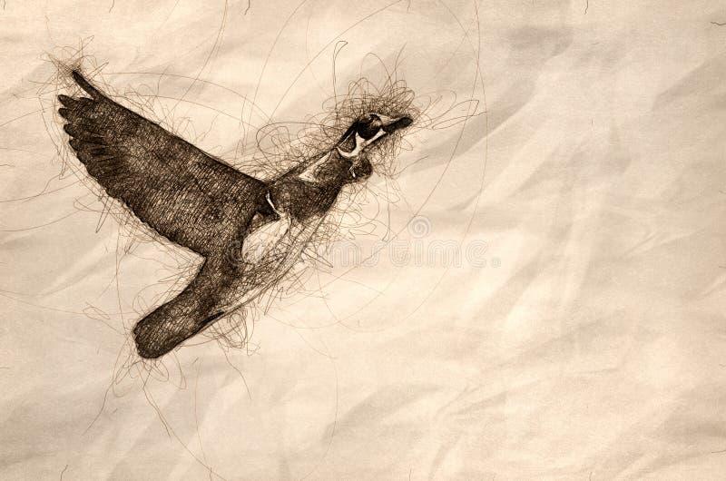 Esboço de uma madeira Duck Flying em um céu azul ilustração do vetor