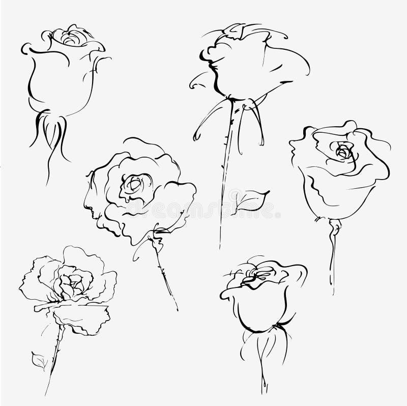 Esboço desenhado mão das rosas ilustração royalty free