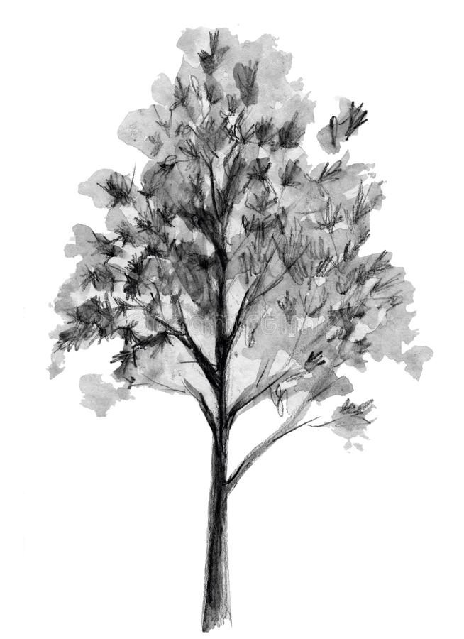 Esboço desenhado mão Ilustração da árvore Elemento traseiro isolado no fundo branco Desenho da carta branca ilustração do vetor
