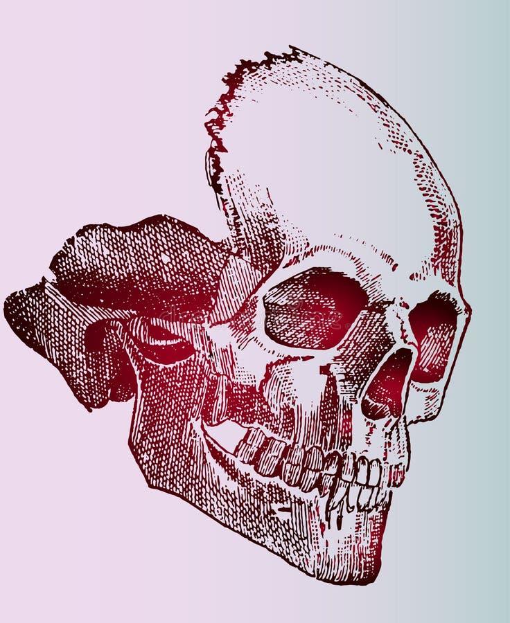 Esboço detalhado vermelho de uma tatuagem do crânio em um fundo bonito do inclinação ilustração stock