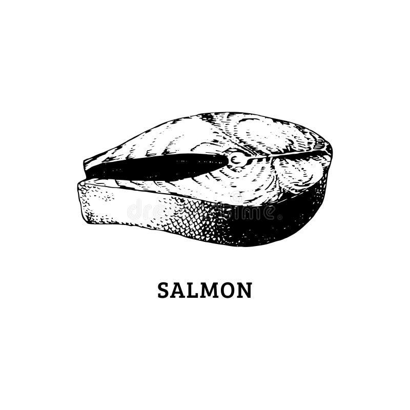Esboço do bife salmon Ilustração do vetor no estilo gravado Imagem tirada do marisco saudável ilustração royalty free