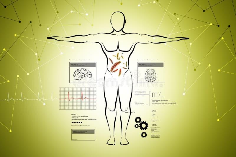 Esboço do corpo humano ilustração royalty free