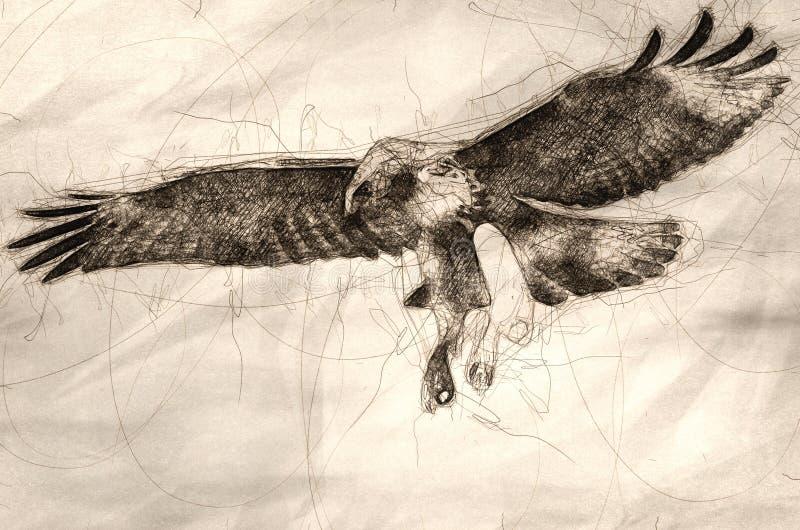 Esboço do falcão atado vermelho em voo ilustração stock