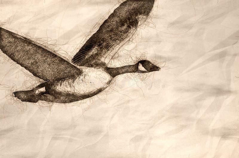 Esboço do ganso de Canadá que toma para migrar sobre a água do rio ilustração do vetor