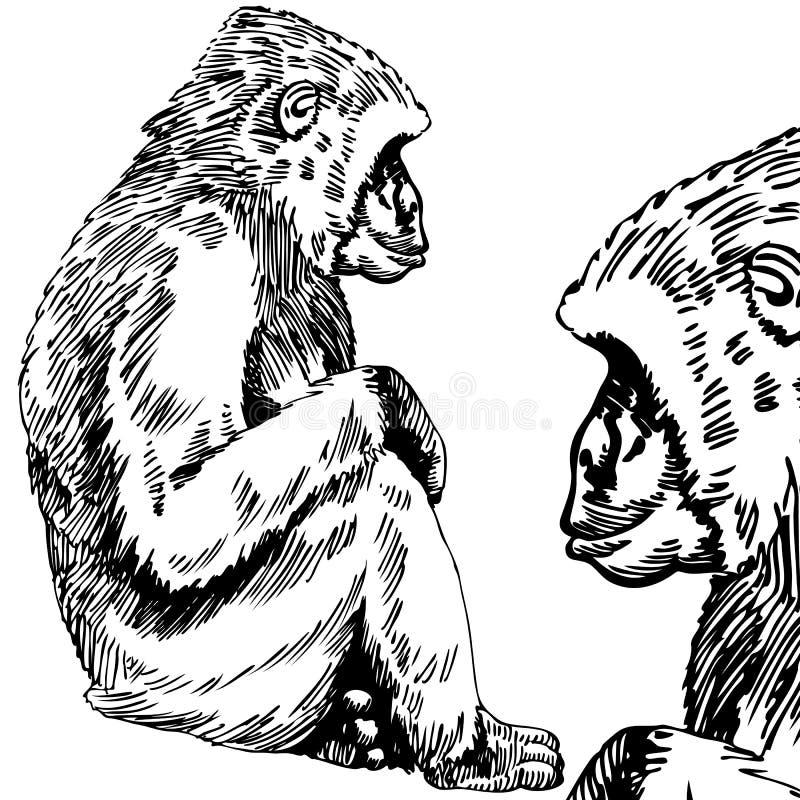 Esboço do gorila/macaco - preto e branco foto de stock royalty free