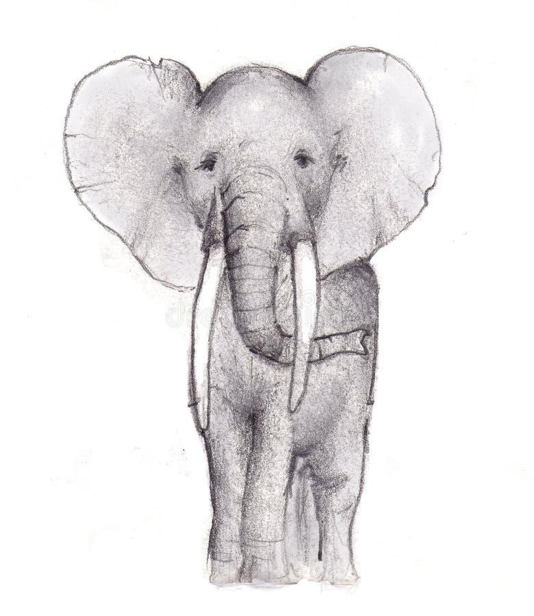 Esboço do lápis do elefante ilustração stock