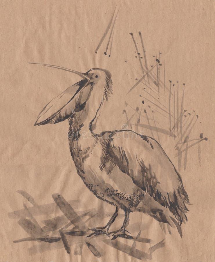 Esboço do monochrome do pelicano ilustração do vetor