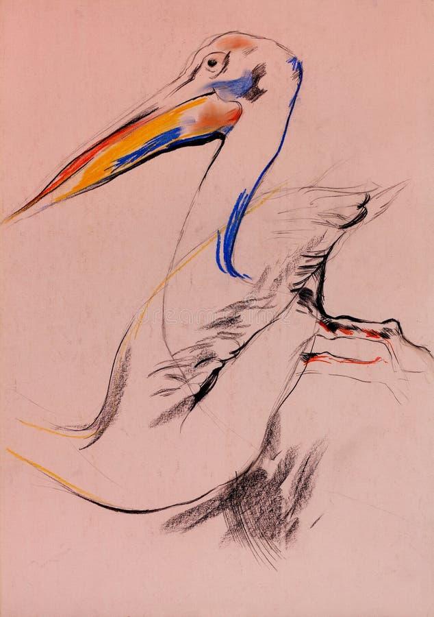 Esboço do pelicano ilustração do vetor