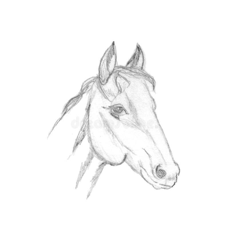 Esboço do perfil da cabeça de cavalo Desenho de lápis isolado no branco ilustração stock