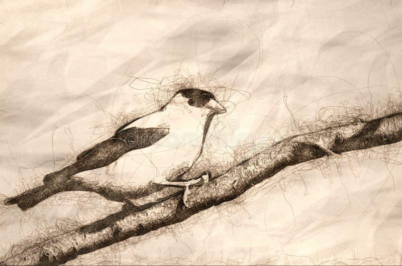 Esboço do pintassilgo americano empoleirado em um ramo ilustração do vetor