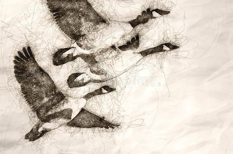 Esboço do rebanho dos gansos que tomam para migrar na luz do amanhecer ilustração royalty free