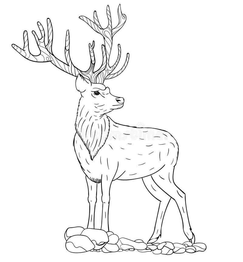 Esboço do vetor de um cervo ilustração royalty free