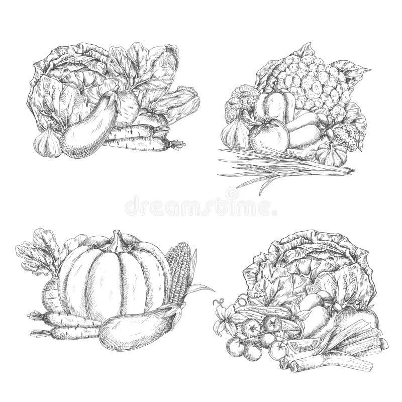 Esboço do vetor dos vegetais ou da colheita dos vegetarianos ilustração do vetor