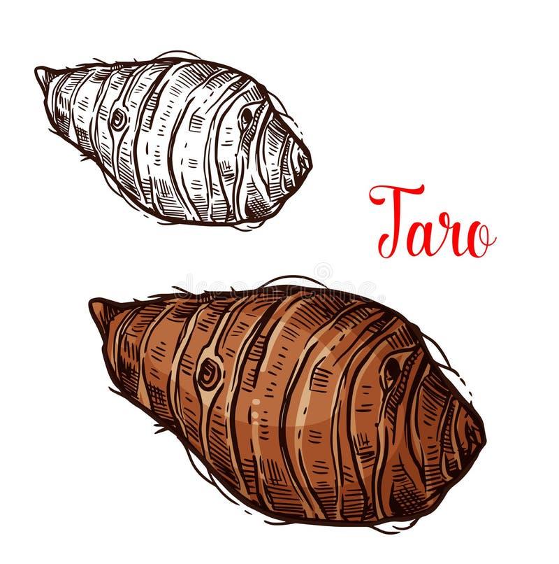 Esboço do vetor do Taro do tubérculo da planta tropical ilustração stock