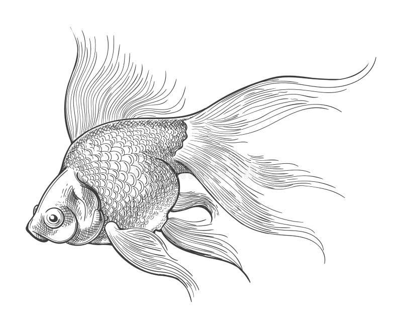 Esboço do vintage do peixe dourado ilustração royalty free