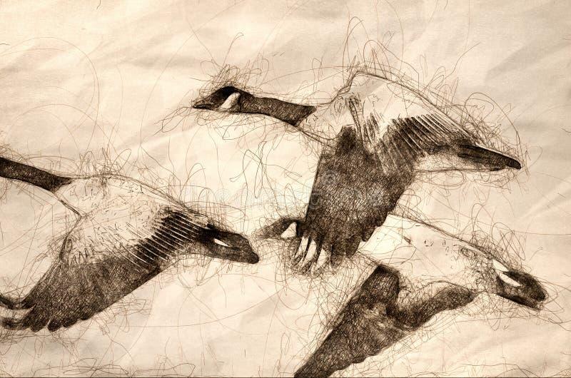 Esboço dos gansos de Canadá que voam através de Autumn Woods ilustração do vetor