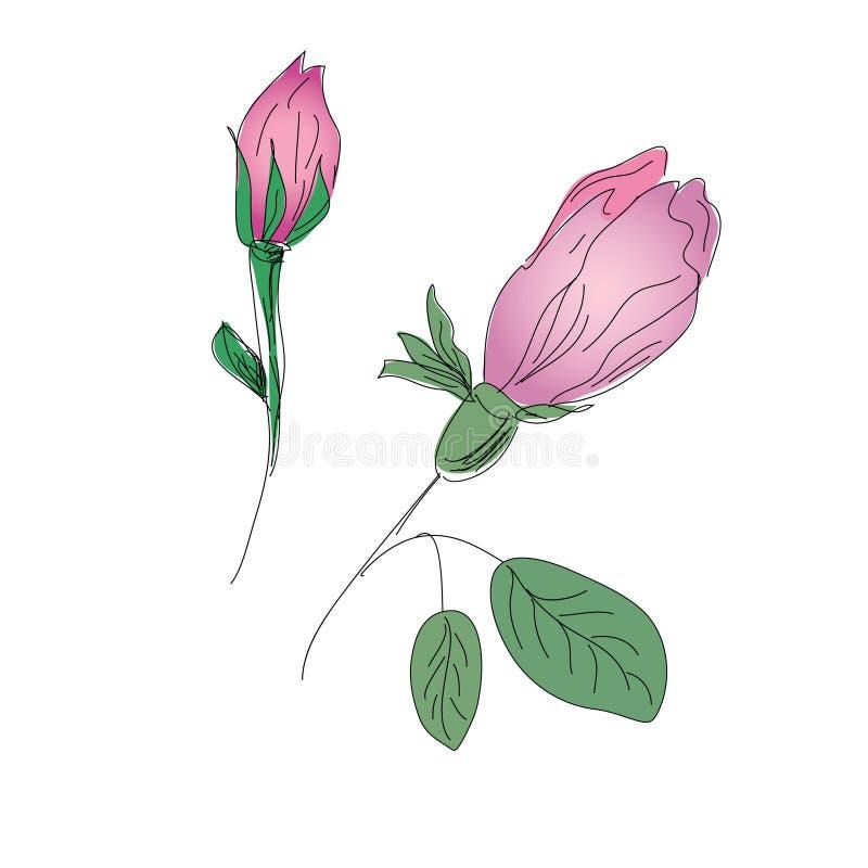 Esboço dos Rosebuds ilustração stock