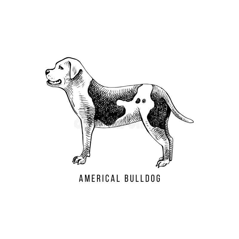 Esboço e rotulação americanos do buldogue na silhueta dos cães ilustração royalty free