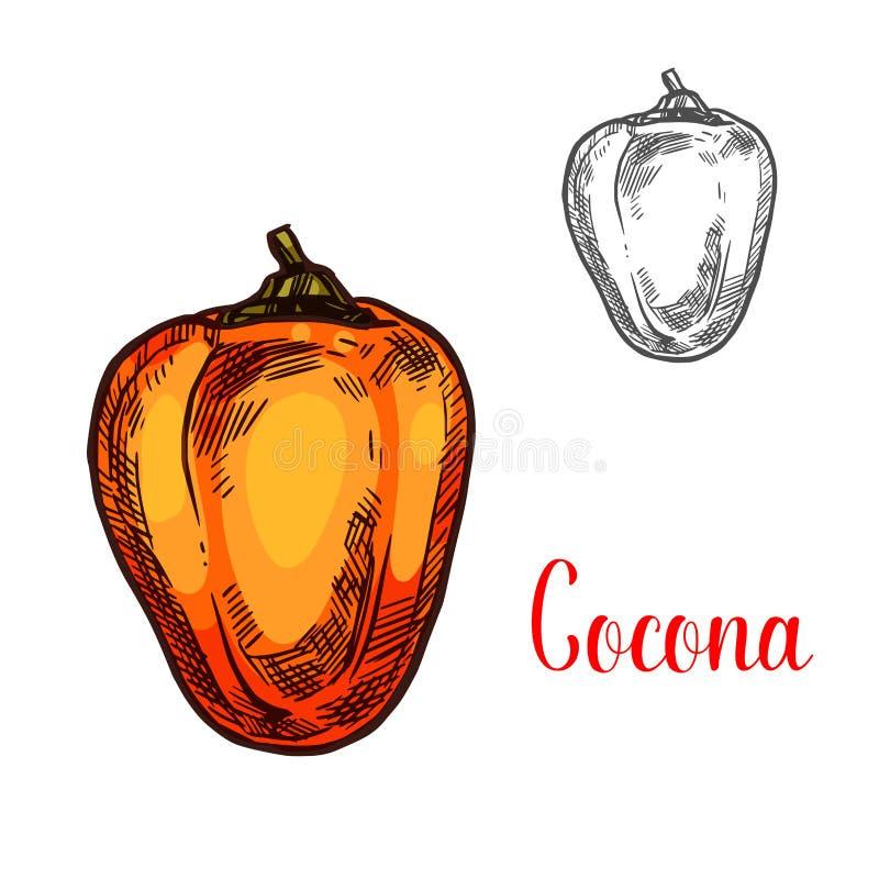 Esboço exótico do Amazonas do fruto de Cocona ilustração royalty free