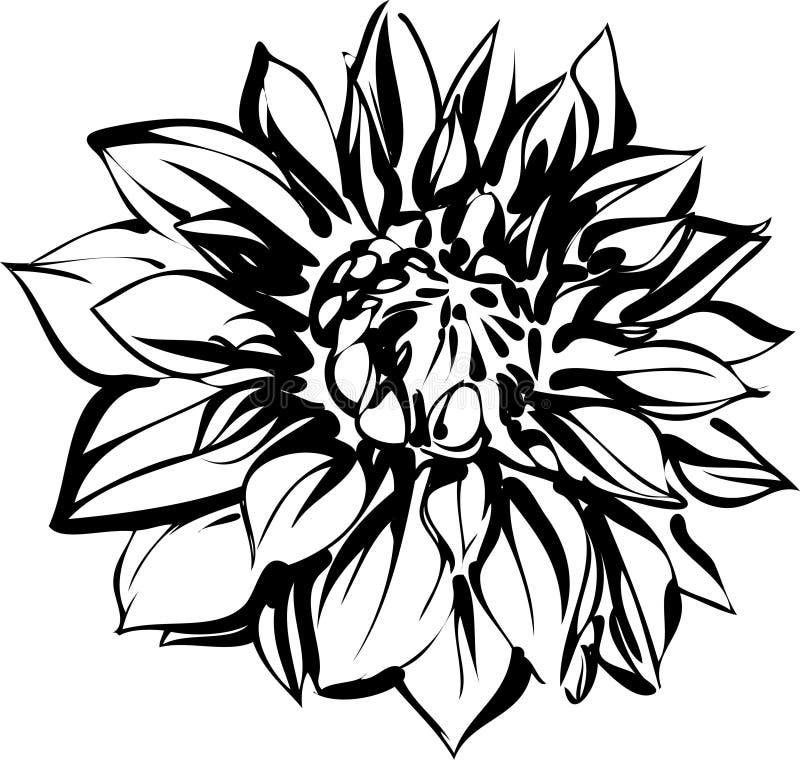 Esboço preto e branco do crisântemo ilustração do vetor