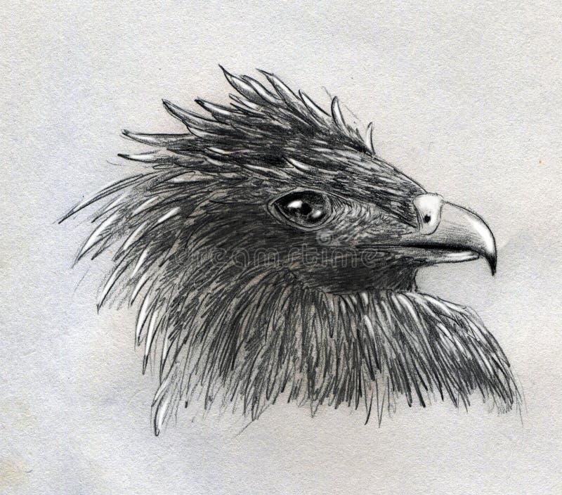Esboço principal da águia ilustração stock