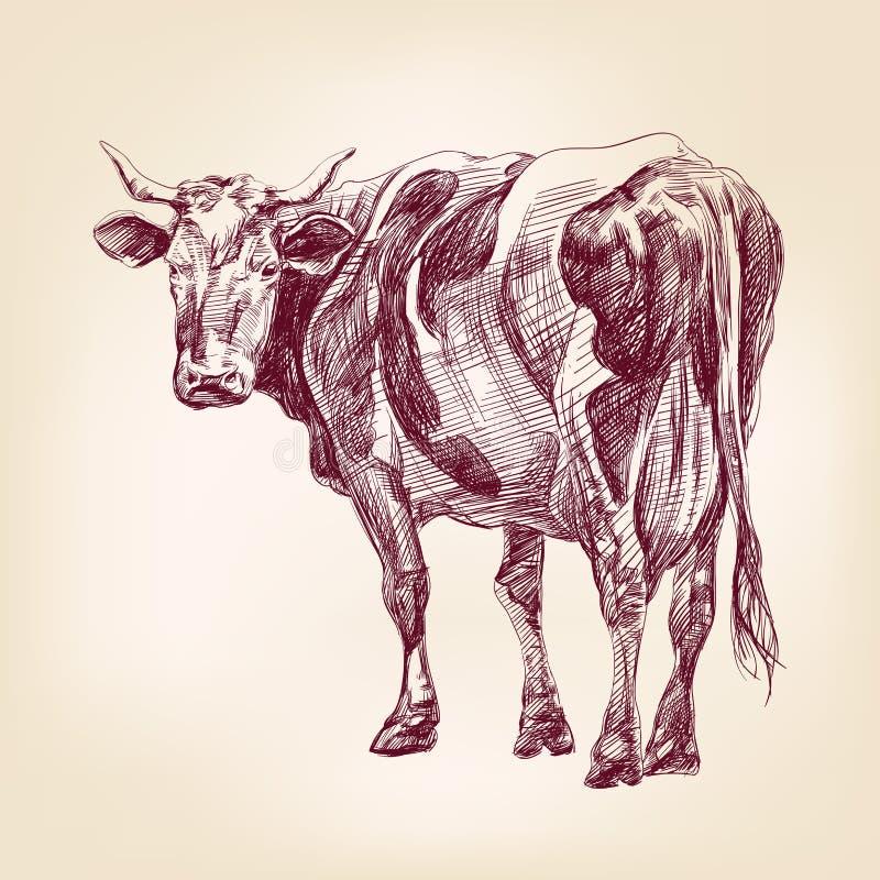 Esboço realístico tirado mão do llustration do vetor da vaca ilustração do vetor
