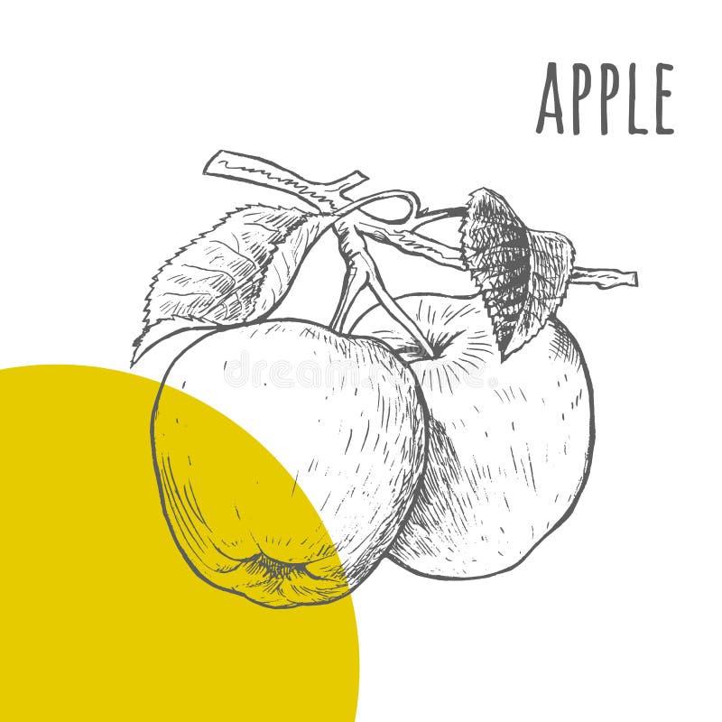 Esboço tirado de Apple lápis a mão livre ilustração stock
