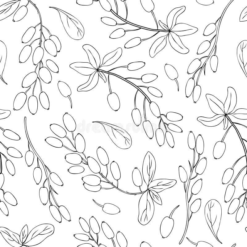 Esboço tirado do vetor do ramo da bérberis do teste padrão mão sem emenda isolado no fundo branco, linha preta baga da arte, natu ilustração do vetor