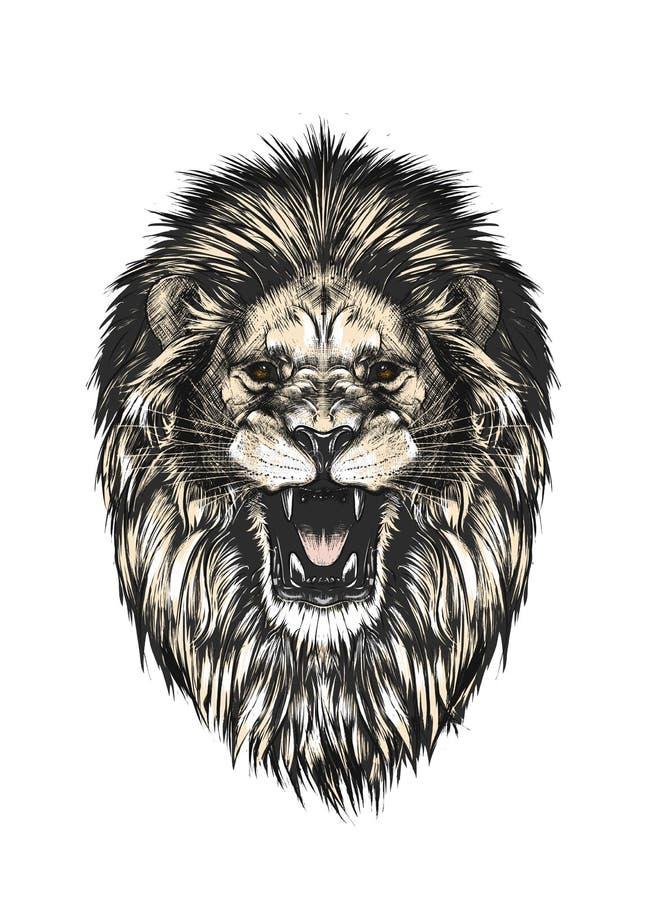 Esboço tirado mão da cabeça do leão na cor isolada no fundo cinzento Desenho detalhado do estilo do vintage Ilustração do vetor imagem de stock royalty free