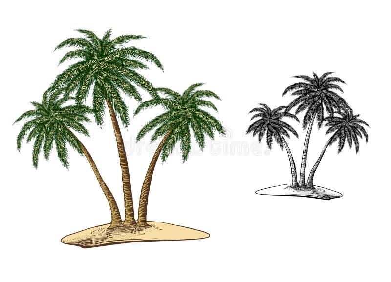 Esboço tirado mão das palmeiras na cor, isolado no fundo branco Desenho detalhado do estilo do vintage Vetor imagem de stock