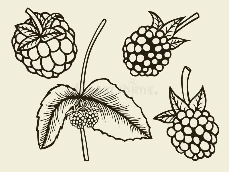 Esboço tirado mão de Blackberry ilustração stock