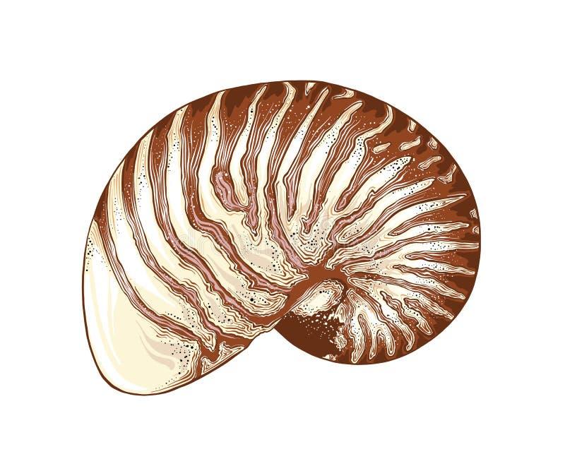 Esboço tirado mão do escudo do nautilus na cor, isolado no fundo branco Desenho detalhado do estilo do vintage Vetor ilustração stock