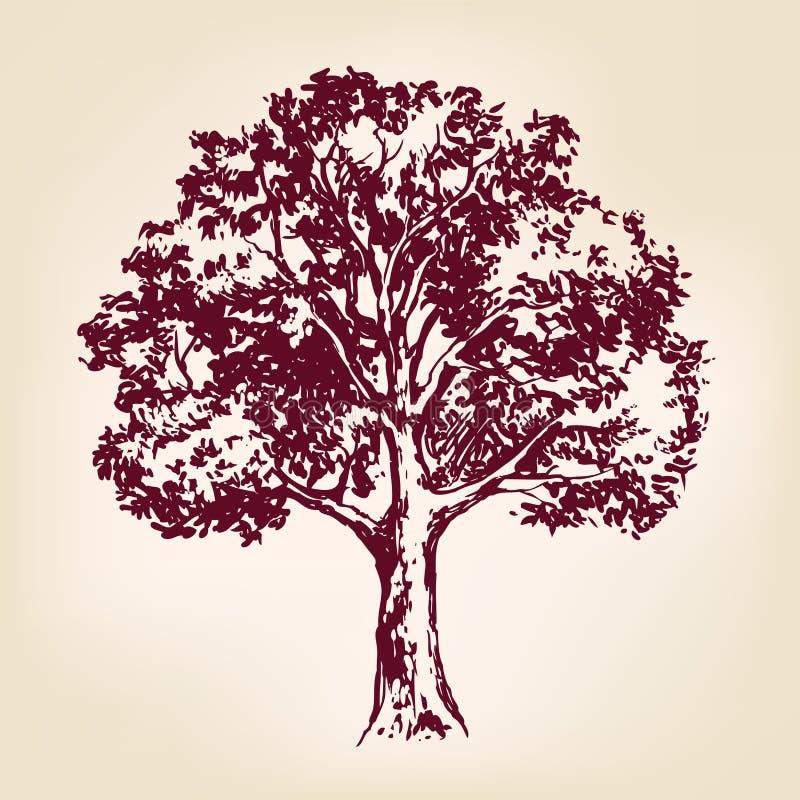 Esboço tirado mão do llustration do vetor da árvore ilustração royalty free