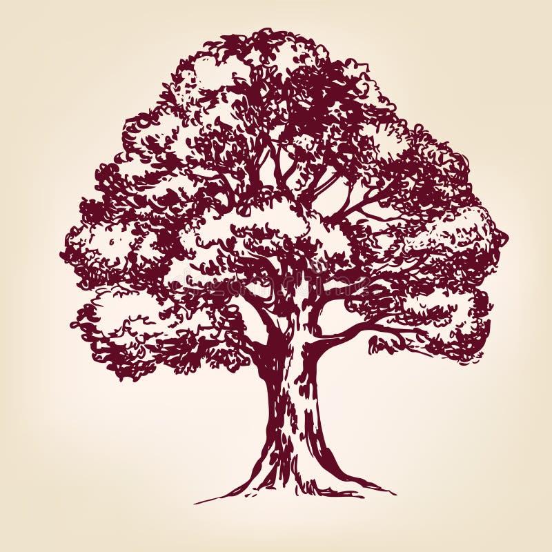 Esboço tirado mão do llustration do vetor da árvore ilustração stock
