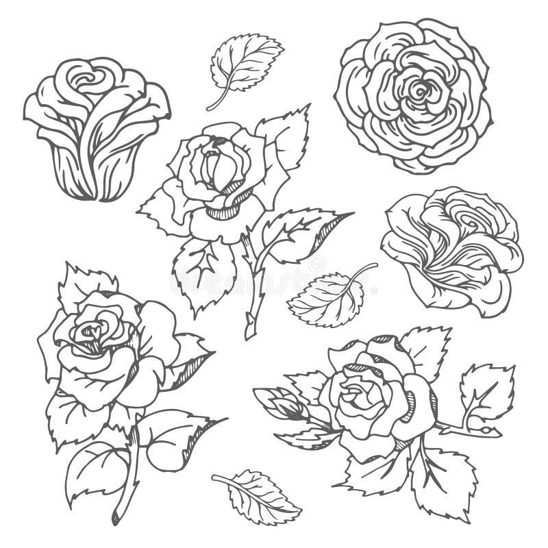 Esboço tirado mão do vetor da ilustração cor-de-rosa da flor no fundo branco ilustração royalty free