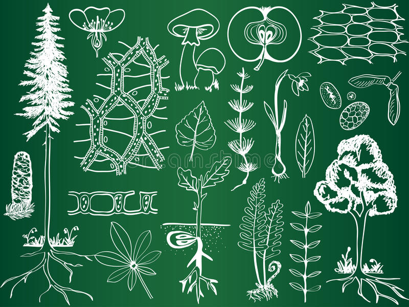 Esboços da planta da biologia na placa de escola ilustração stock