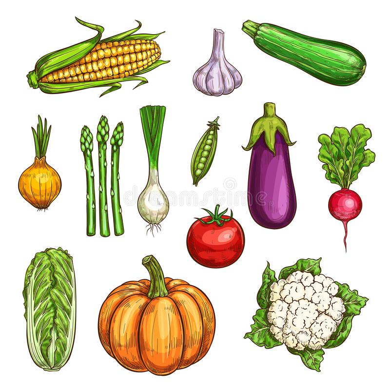 Esboços isolados dos vegetais da cor ajustados ilustração stock