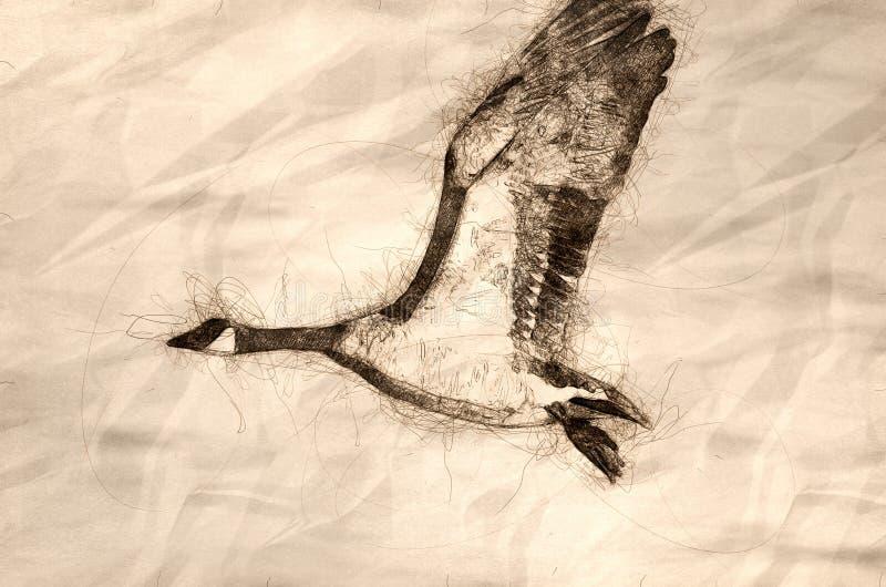 Esbo?o de um ganso de Canad? que toma para migrar da ?gua do rio ilustração royalty free