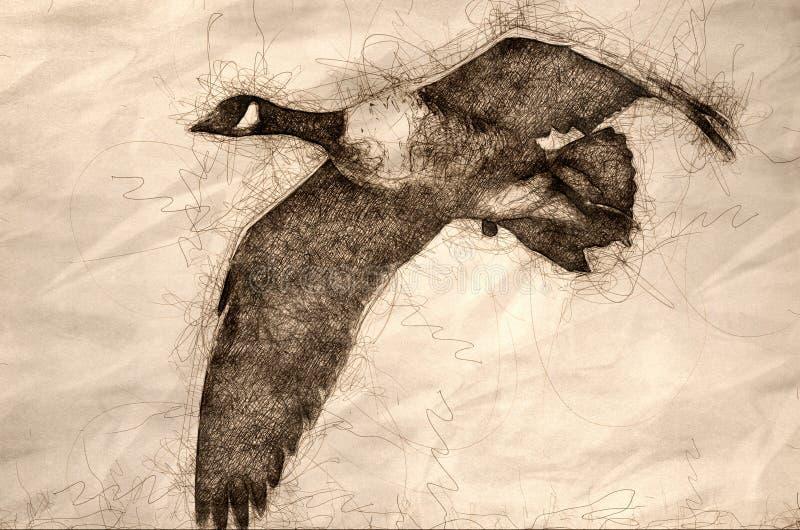 Esbo?o de um olhar mais atento em um ganso de Canad? em voo ilustração do vetor