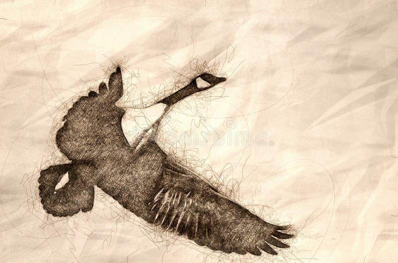 Esbo?o de um voo do ganso de Canad? em um c?u azul ilustração royalty free