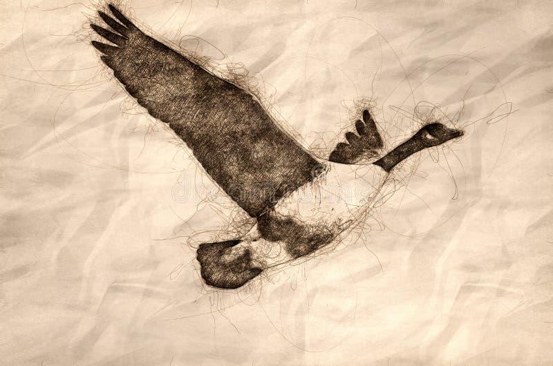 Esbo?o de um voo do ganso de Canad? em um c?u azul ilustração stock