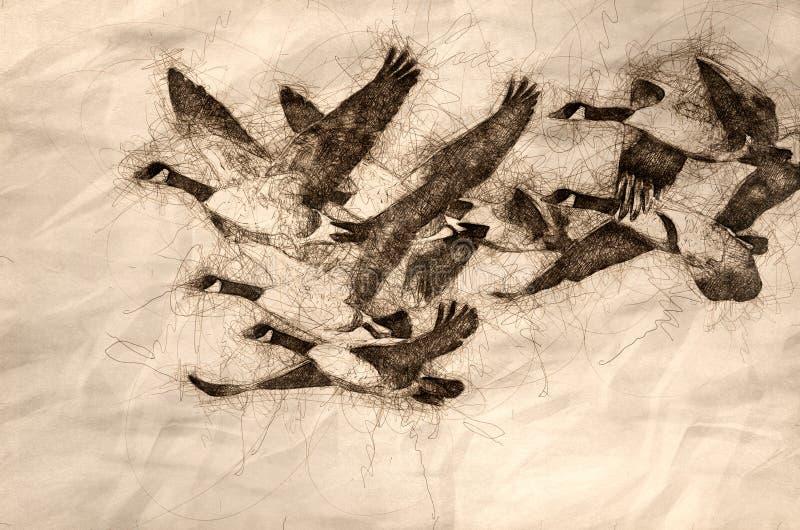 Esbo?o dos gansos de Canad? que voam atrav?s de Autumn Woods ilustração stock