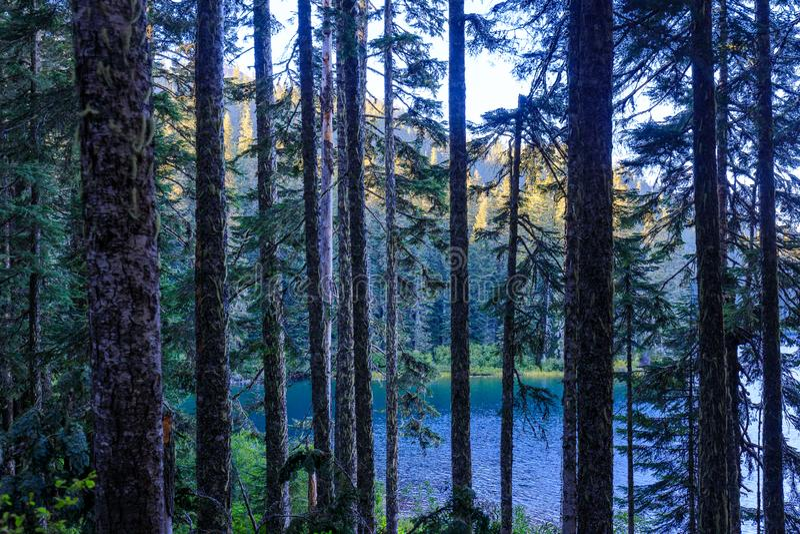 Escénico espectacular del lago council en Washington fotografía de archivo libre de regalías