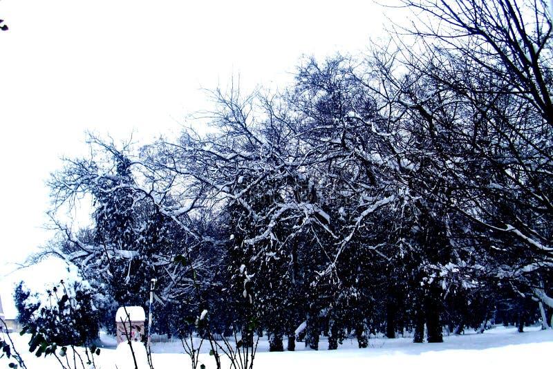 Escúdese el erski del ` de DunÄ, Serbia, invierno, viaje, Kulpin fotografía de archivo